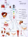 Начальная диагностика меридианов